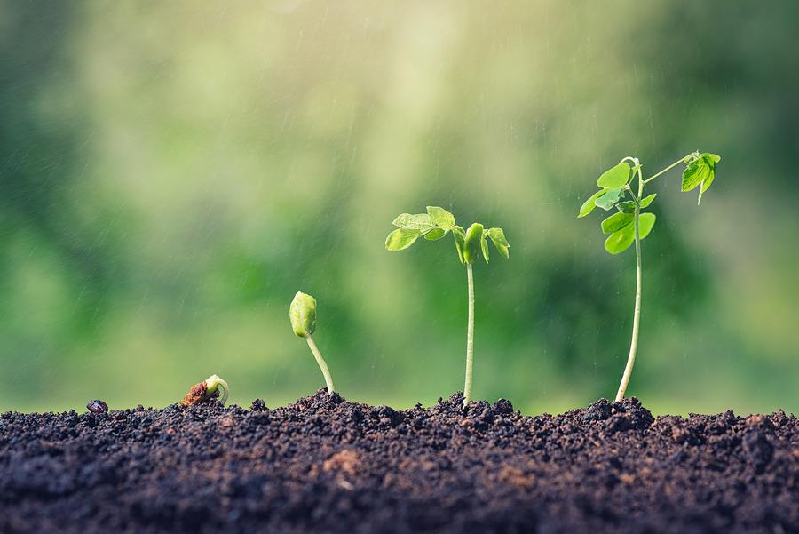 plant groeit van klein naar groot