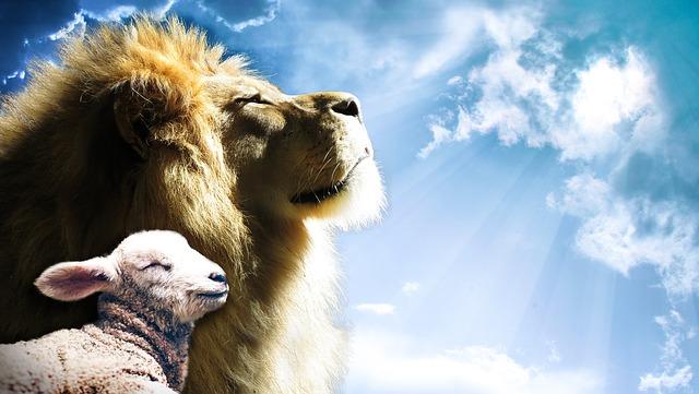 De leeuw in de kudde schapen