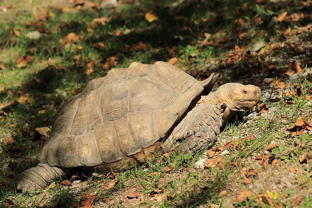 Schildpad: herstel gaat langzaam
